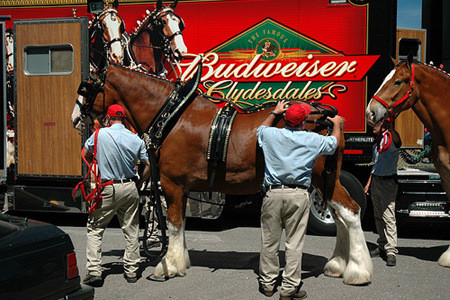 the super bowl commercials: budweiser clydesdales are king of the ads - national lifestyle